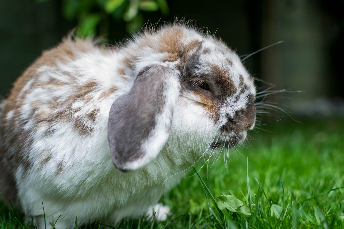 Rabbit_PhotoDSC_0585