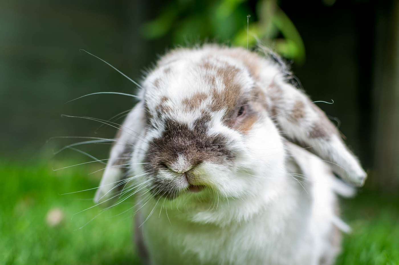 Rabbit_PhotoDSC_0590