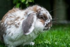 Rabbit_PhotoDSC_0585
