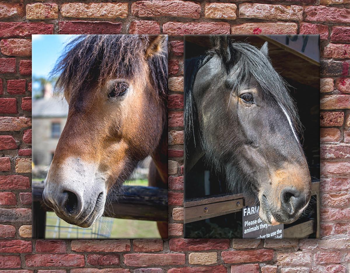 Canvas prints Thetford photography horses