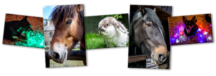 Pets header photographs